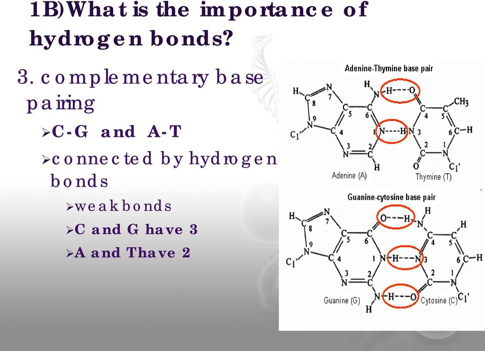 complementary base pairing C-G and A-T