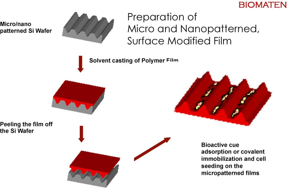 Film Peeling the film off the Si Wafer Bioactive cue adsorption