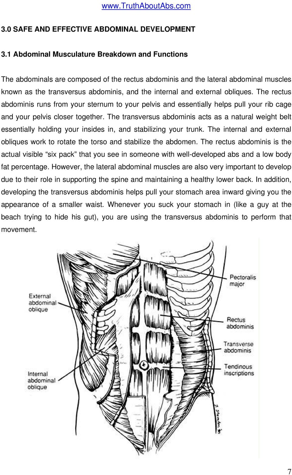 obliques. The rectus abdominis runs from your sternum to your pelvis and essentially helps pull your rib cage and your pelvis closer together.