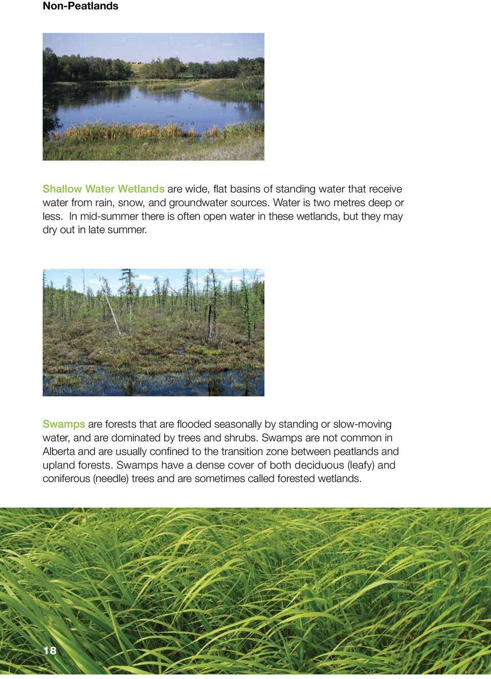 Swamps are forests that are flooded seasonally by standing or slow-moving water, and are dominated by trees and shrubs.