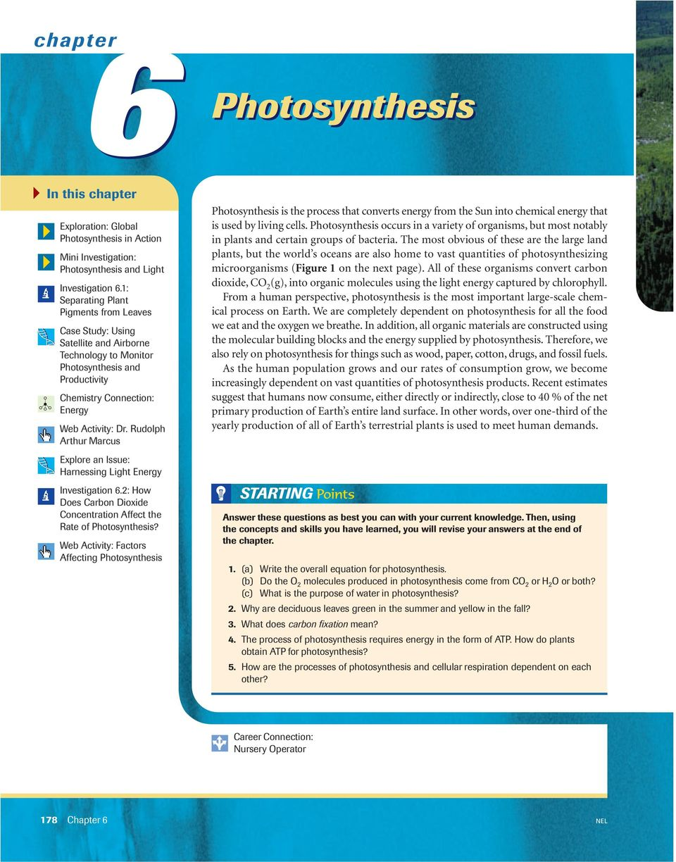 photosynthesis essay questions