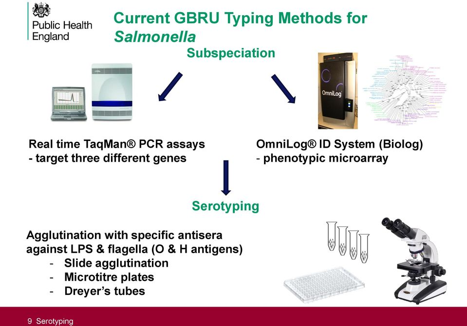 microarray Serotyping Agglutination with specific antisera against LPS & flagella