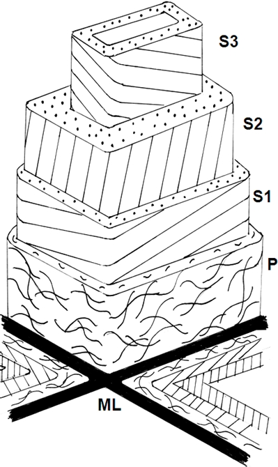 arrangement of microfibrils, for example, into layers S3, S2 and S1 in the case of wood cells (Figure 6).