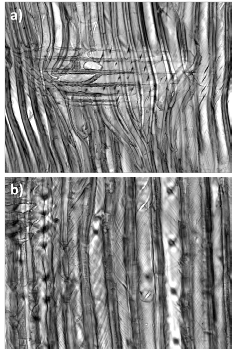 Figure 11. Radial sections of (a) common juniper and (b) compression wood of spruce. Helical grooves or cavities indicating the MFA of the cell wall are clearly visible. (Paper III) Table 5.