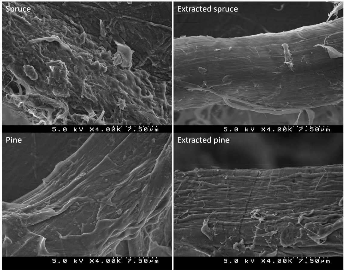 Figure 16. SEM micrographs of unextracted and extracted spruce and pine TMP fibres. (Unpublished data) Removal of residual lignin seen in the SEM images was further supported by ESCA measurements.