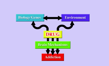 8 No single factor determines whether a person will become addicted to drugs. Why do some people become addicted to drugs, while others do not?