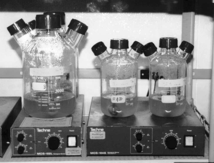 The culture volume should always remain less than half of the full volume of the flask. For example, a 1-liter flask should contain <500 ml suspended culture.