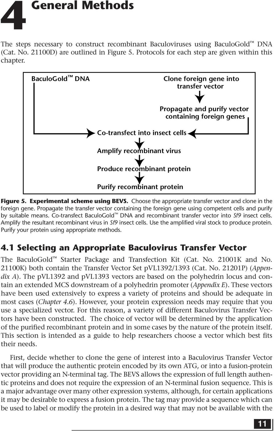containing foreign genes Figure 5. Experimental scheme using BEVS. Choose the appropriate transfer vector and clone in the foreign gene.