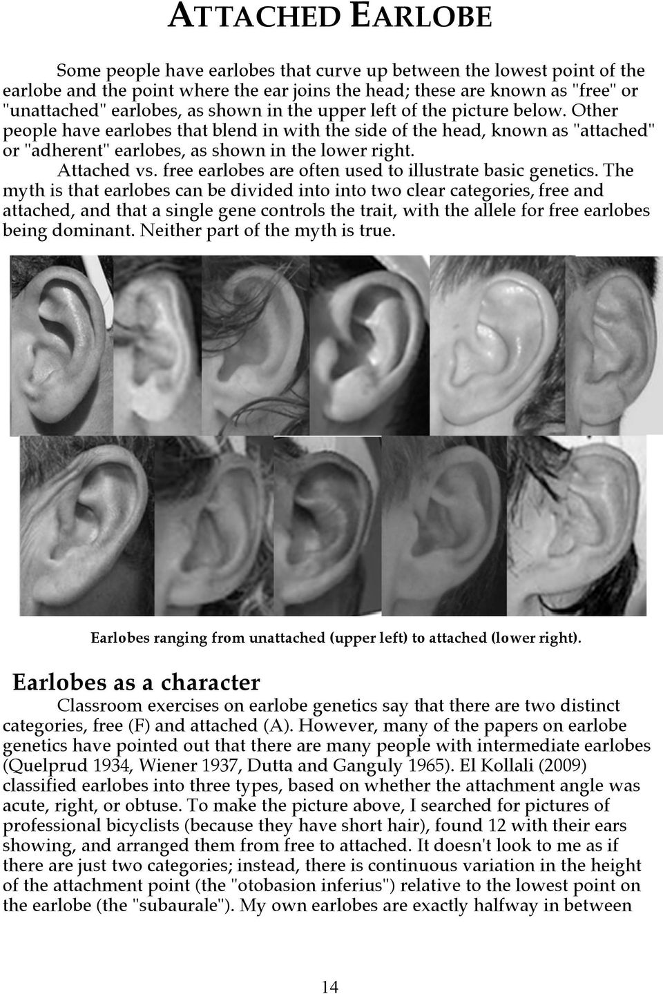 free earlobes are often used to illustrate basic genetics.