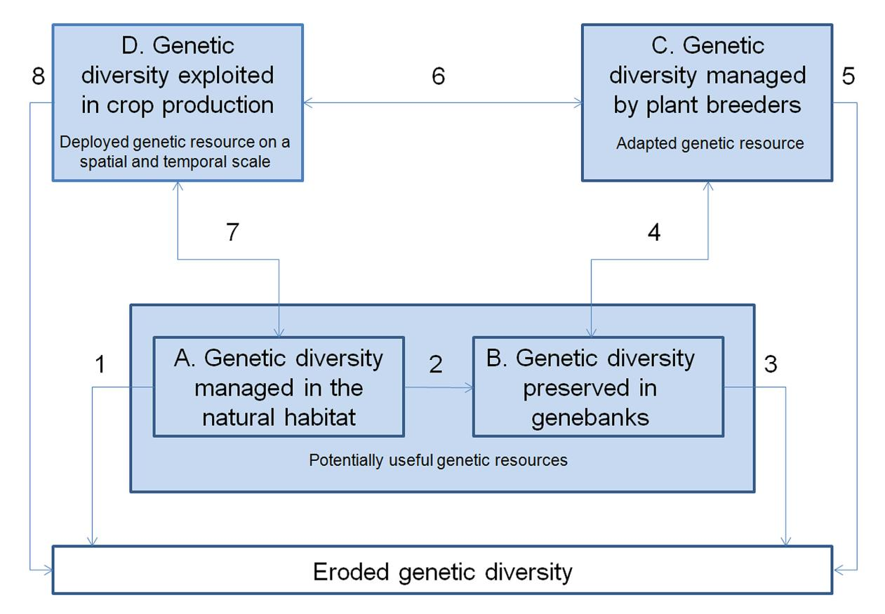 incentives or very long (several decades) if a landrace has been grown by villagers for non-profit, i.e. cultural reasons. Figure 2. Description of a crop specific plant breeding system.