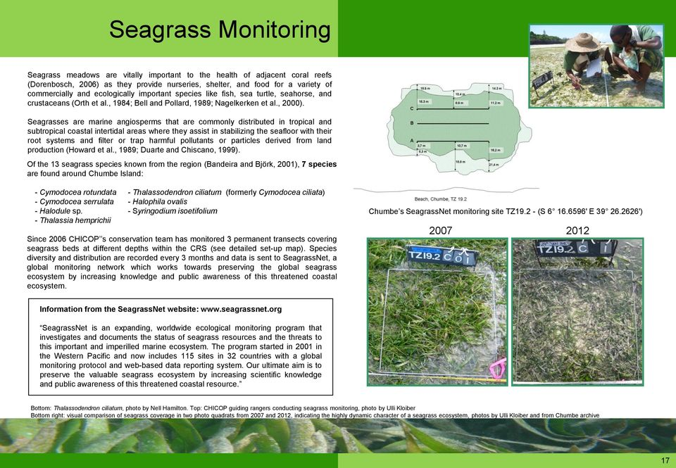 Seagrasses are marine angiosperms that are commonly distributed in tropical and subtropical coastal intertidal areas where they assist in stabilizing the seafloor with their root systems and filter