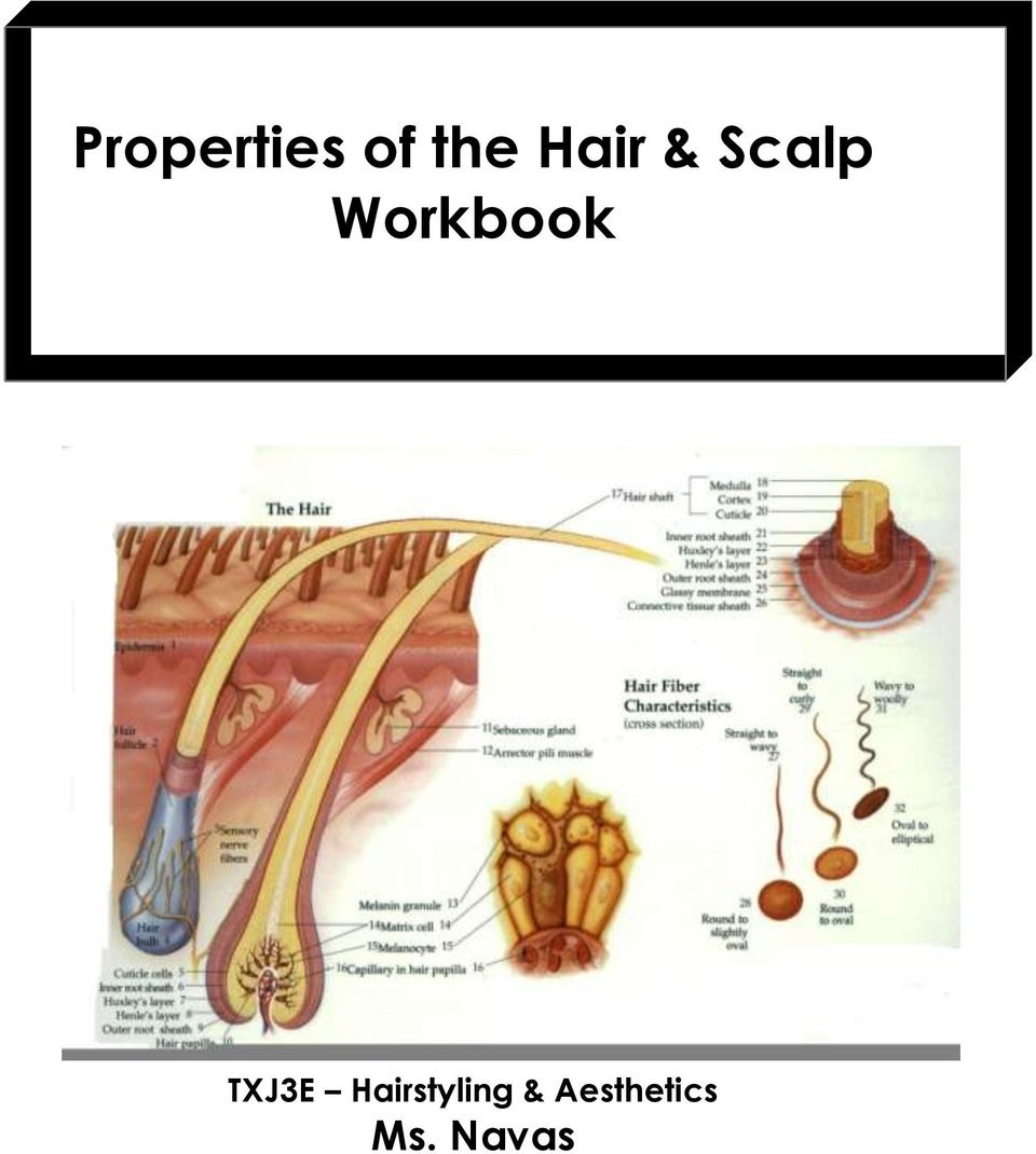 Properties of the hair scalp workbook pdf 2 how will knowing about the underlying properties of the hair and scalp help me to be a more successful cosmetologist men and women of all ages want fandeluxe Gallery