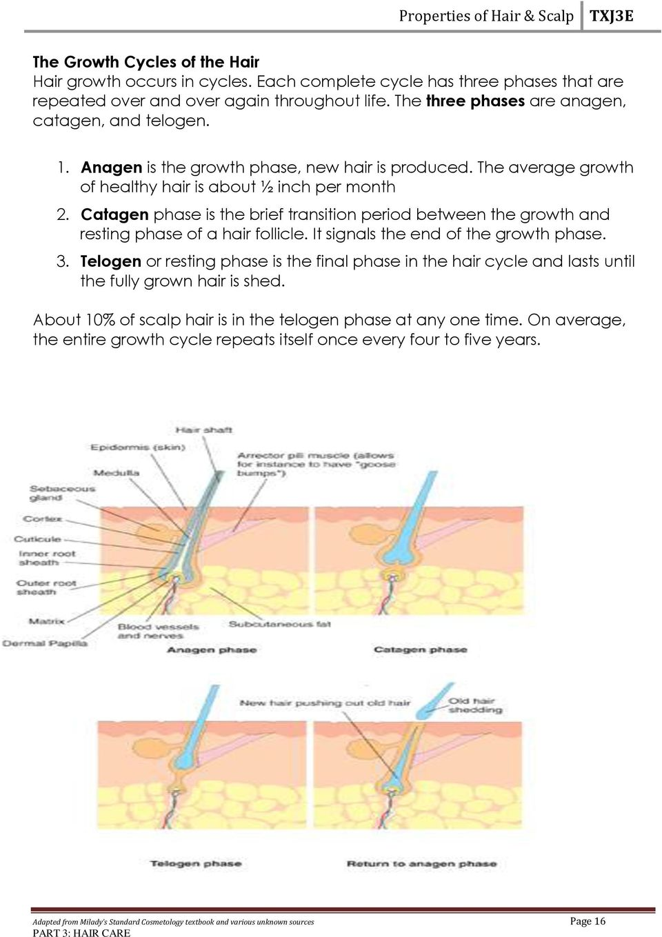 Catagen phase is the brief transition period between the growth and resting phase of a hair follicle. It signals the end of the growth phase. 3.