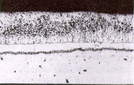 Fig. 1 Microstructure of Hot-Dip Galvanized Coating on Steel being silicon and phosphorous.