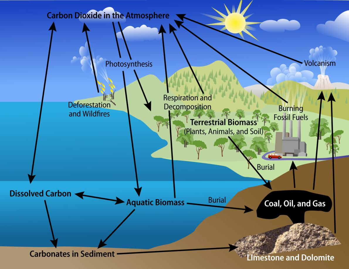 The Carbon Cycle Adapted from: CO 2 logic: http://www.co2logic.com/home.aspx/html/images/carbon%20cycle.jpg. 3.