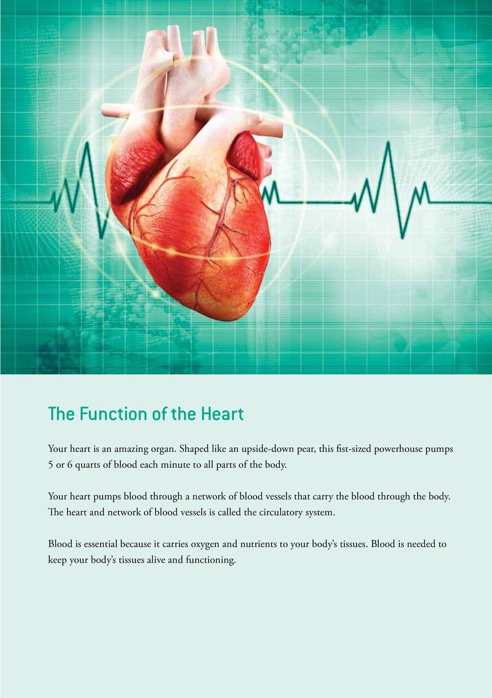 Your heart pumps blood through a network of blood vessels that carry the blood through the body.