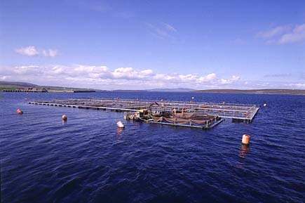 SUSTAINABLE AQUACULTURE Dr.