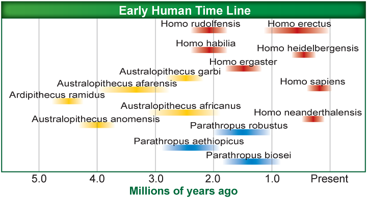 Emergence of Modern Humans Out-of-Africa hypothesis 200,000 years ago, a morphologically diverse genus of hominins