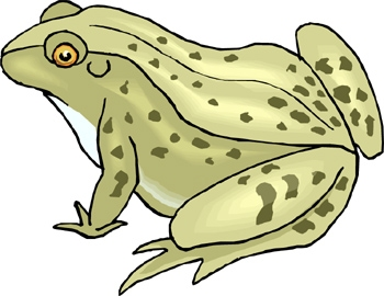 Fact Card #17 Fact Card #18 Frogs have small teeth on the upper edge of their jaw.