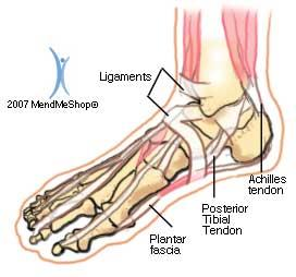 Peroneal Pertaining to the fibula or outer side of the leg.