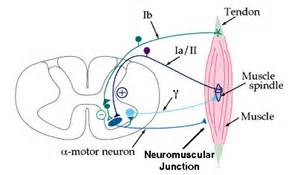 Neural Function Assessment Traditional Direct Electrical