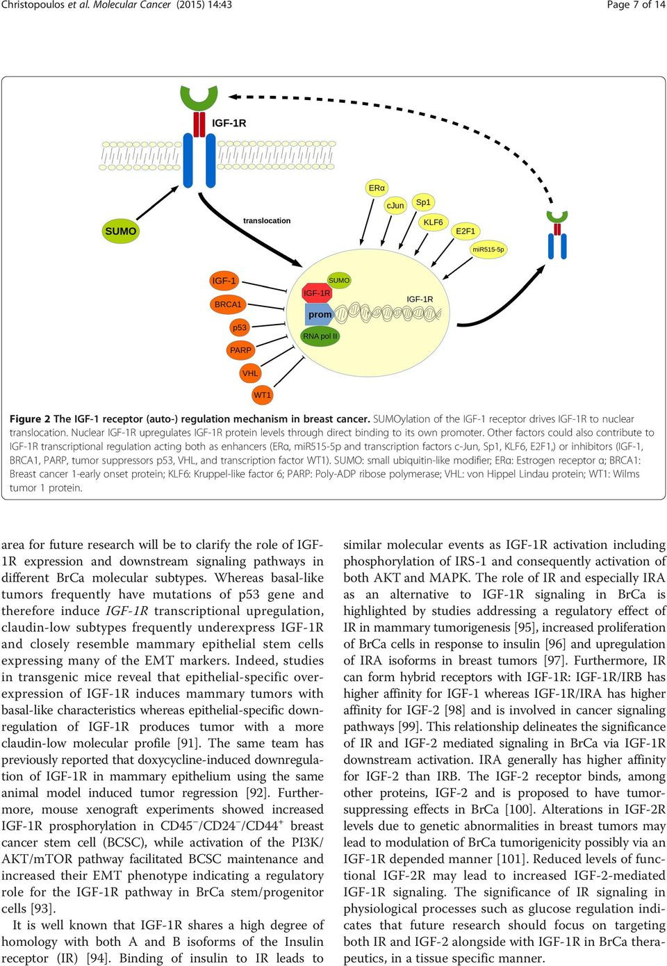Other factors could also contribute to IGF-1R transcriptional regulation acting both as enhancers (ERα, mir515-5p and transcription factors c-jun, Sp1, KLF6, E2F1,) or inhibitors (IGF-1, BRCA1, PARP,