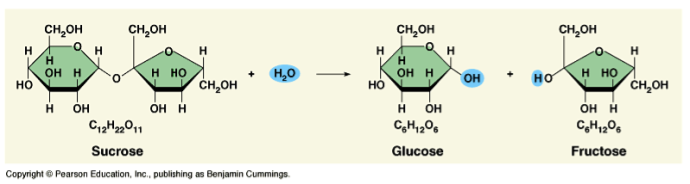 ex. to hydrolyze sucrose, the bond between glucose and fructose must be broken and