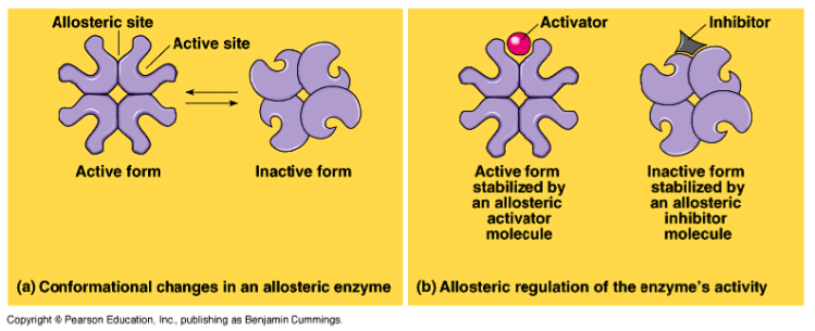 Allosteric regulation of