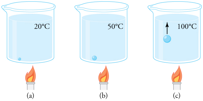(a) An air bubble in water starts out saturated with water vapor at 20ºC. (b) As the temperature rises, water vapor enters the bubble because its vapor pressure increases.