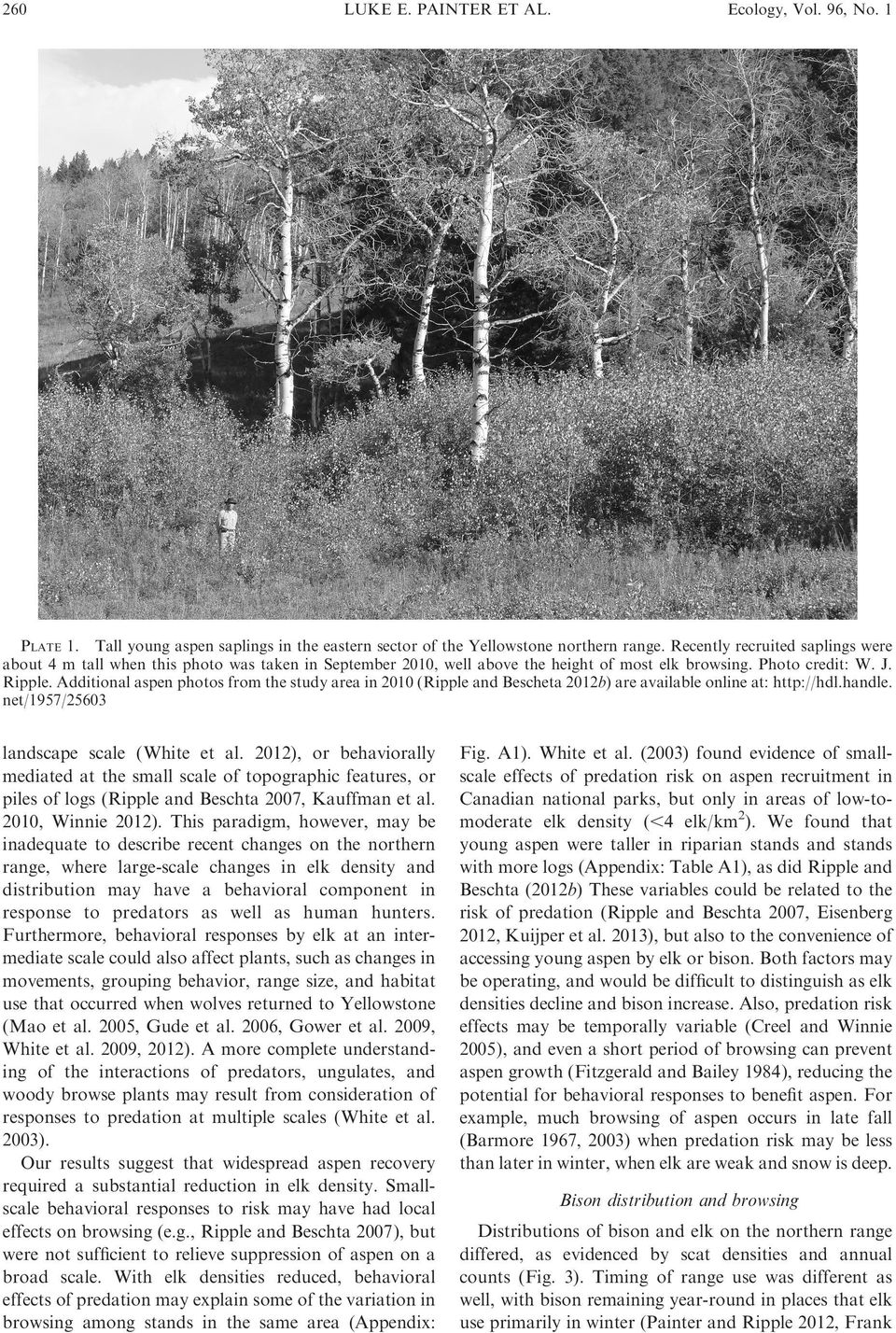 Additional aspen photos from the study area in 2010 (Ripple and Bescheta 2012b) are available online at: http://hdl.handle. net/1957/25603 landscape scale (White et al.