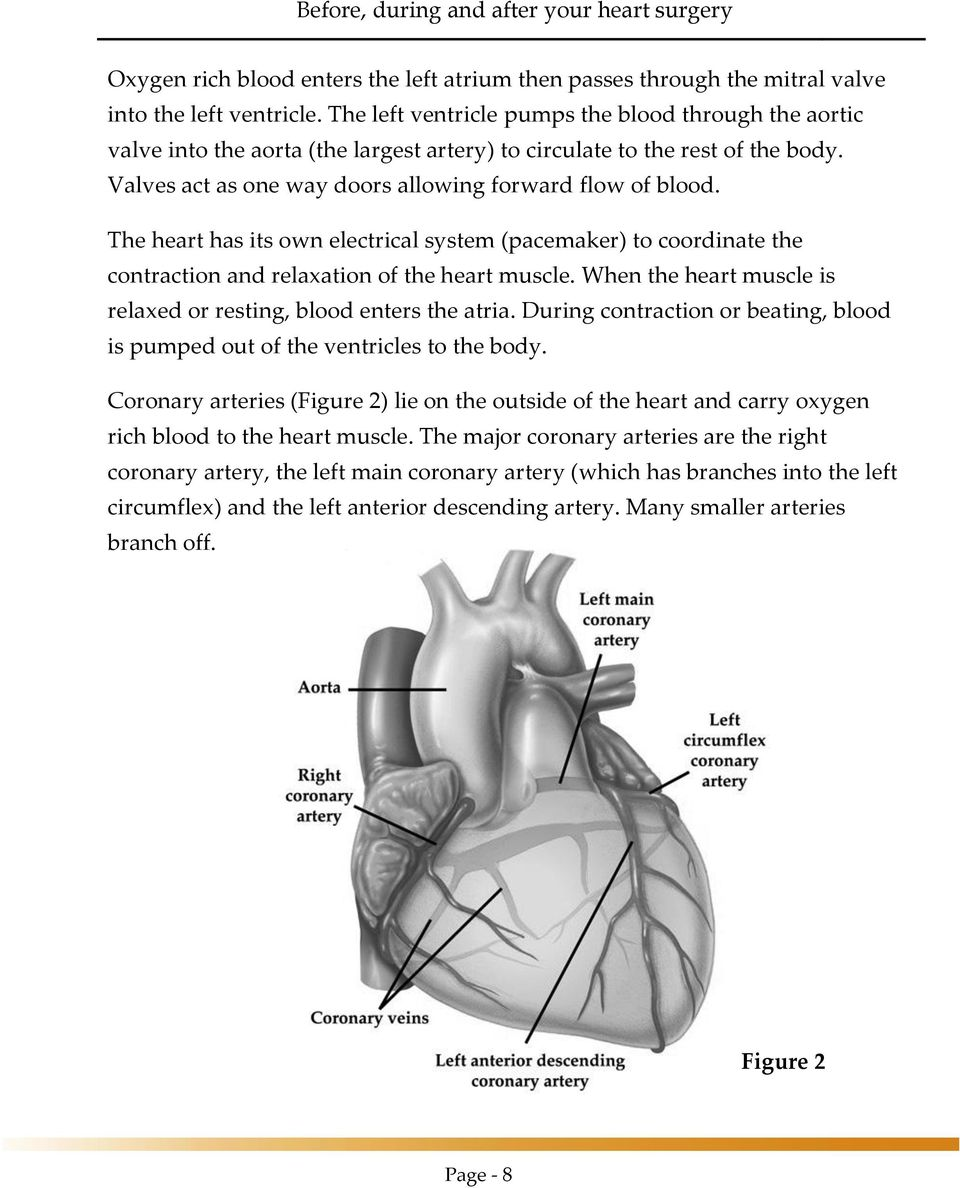 The heart has its own electrical system (pacemaker) to coordinate the contraction and relaxation of the heart muscle. When the heart muscle is relaxed or resting, blood enters the atria.