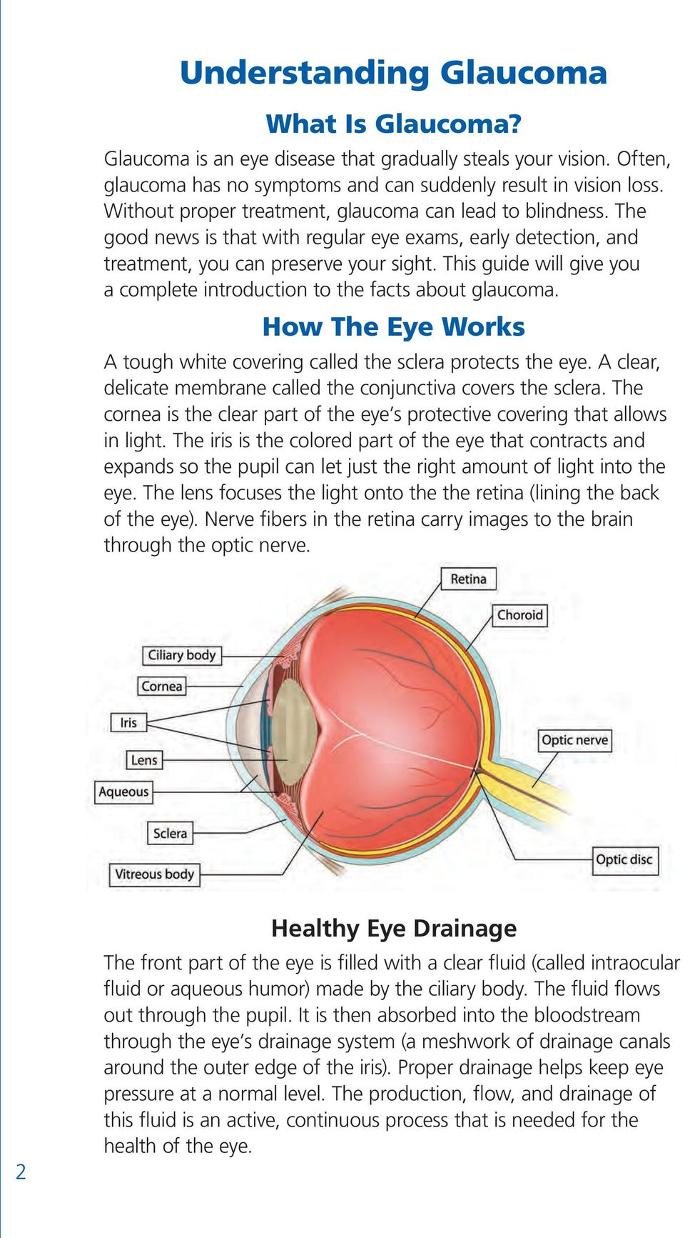 This guide will give you a complete introduction to the facts about glaucoma. How The Eye Works A tough white covering called the sclera protects the eye.