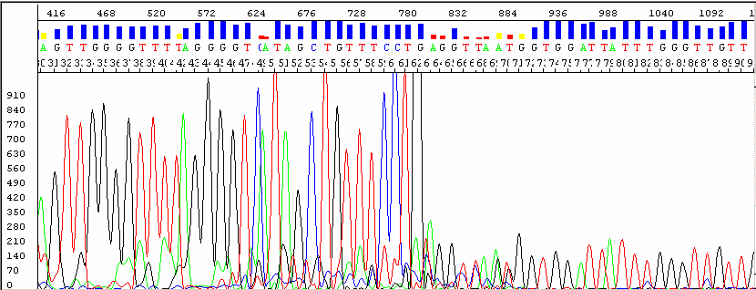 Chapter 8 Troubleshooting Double peaks: at the beginning of the sequence (bisulfite conversion) Electropherogram Possible Cause(s) Sequencing reaction issue: Observed when a PCR product is used as a