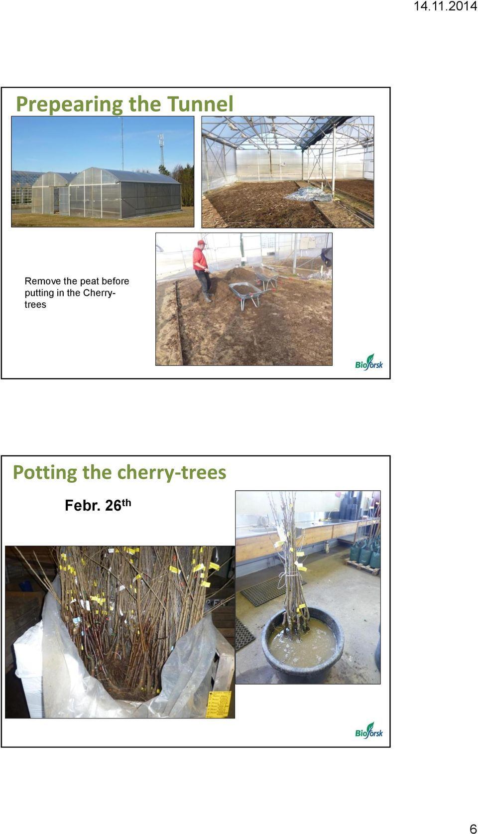 putting in the Cherrytrees