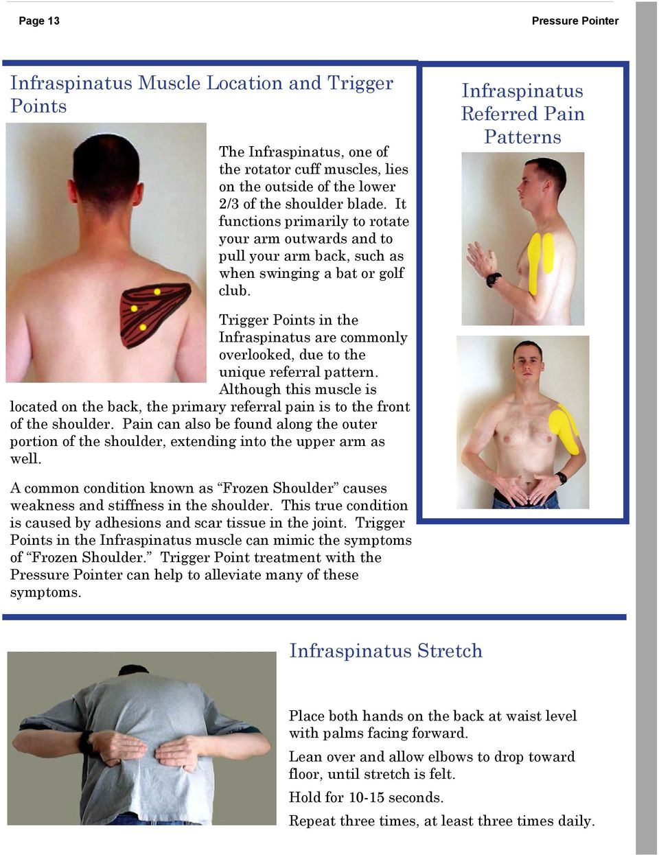 Infraspinatus Referred Pain Patterns Trigger Points in the Infraspinatus are commonly overlooked, due to the unique referral pattern.