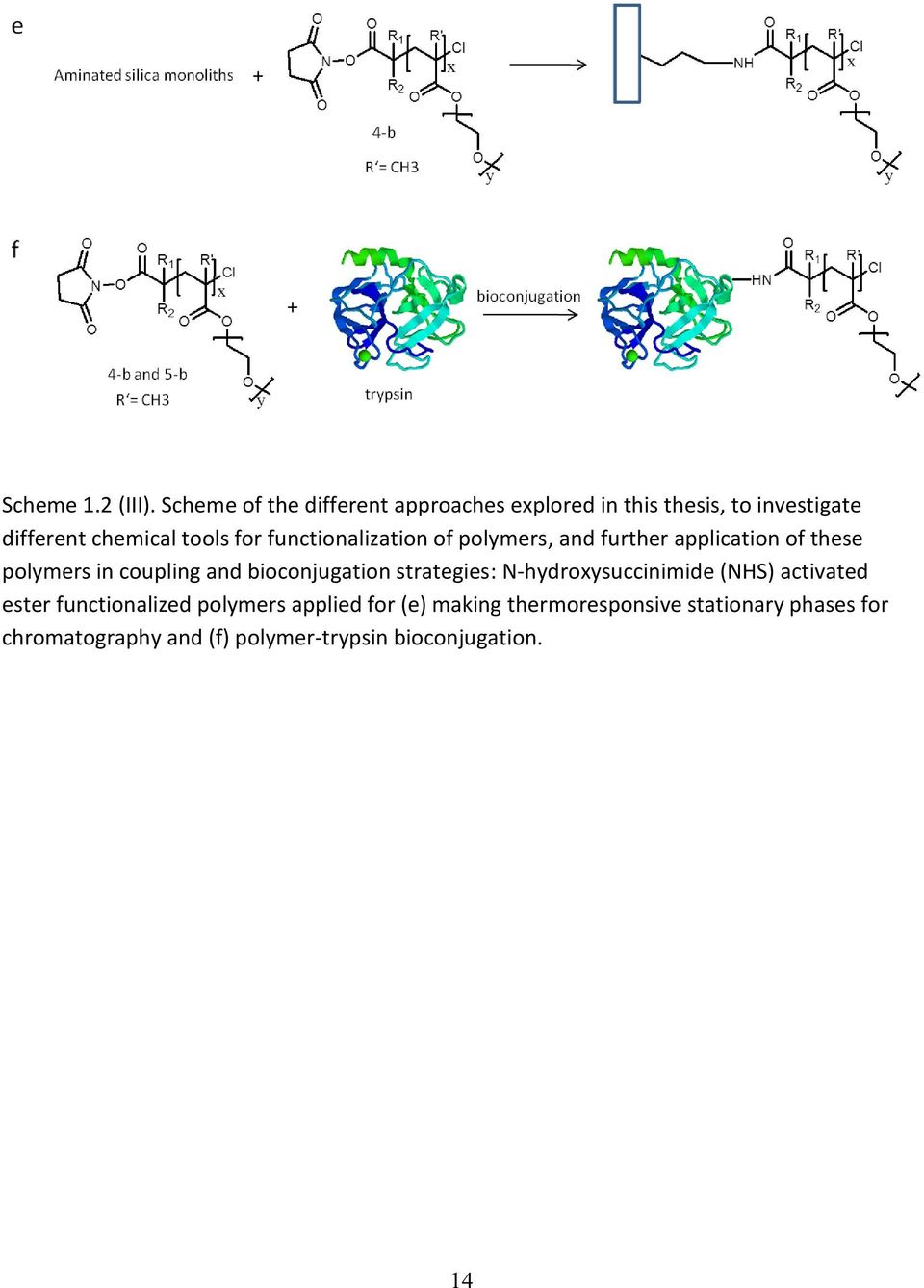 functionalization of polymers, and further application of these polymers in coupling and bioconjugation