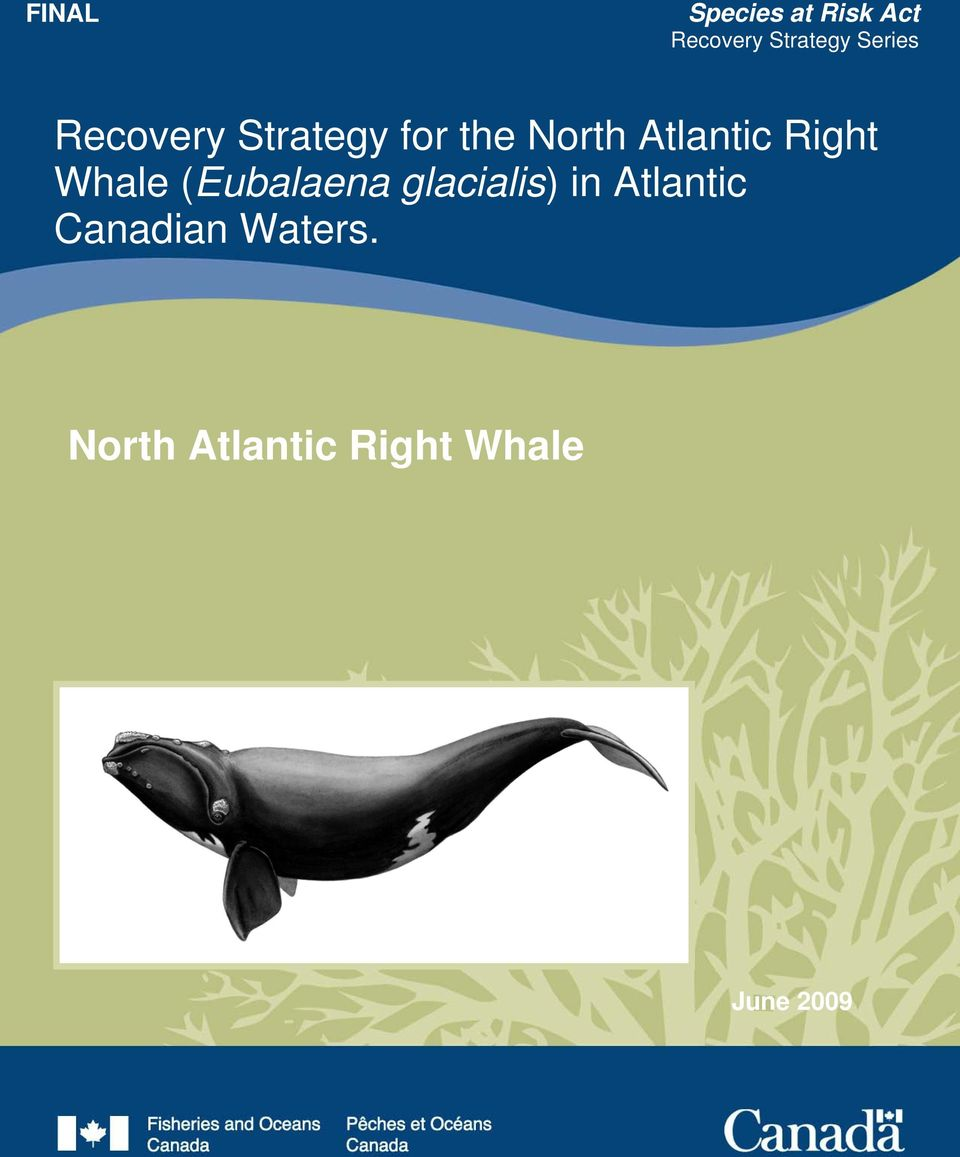 Strategy for the North Atlantic Right Whale (Eubalaena