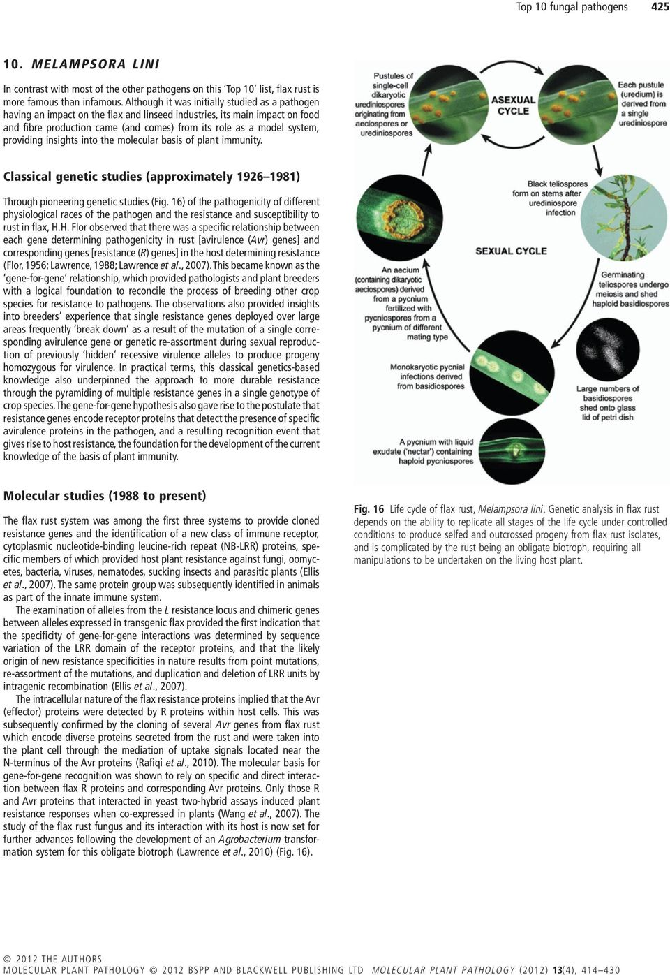 providing insights into the molecular basis of plant immunity. Classical genetic studies (approximately 1926 1981) Through pioneering genetic studies (Fig.