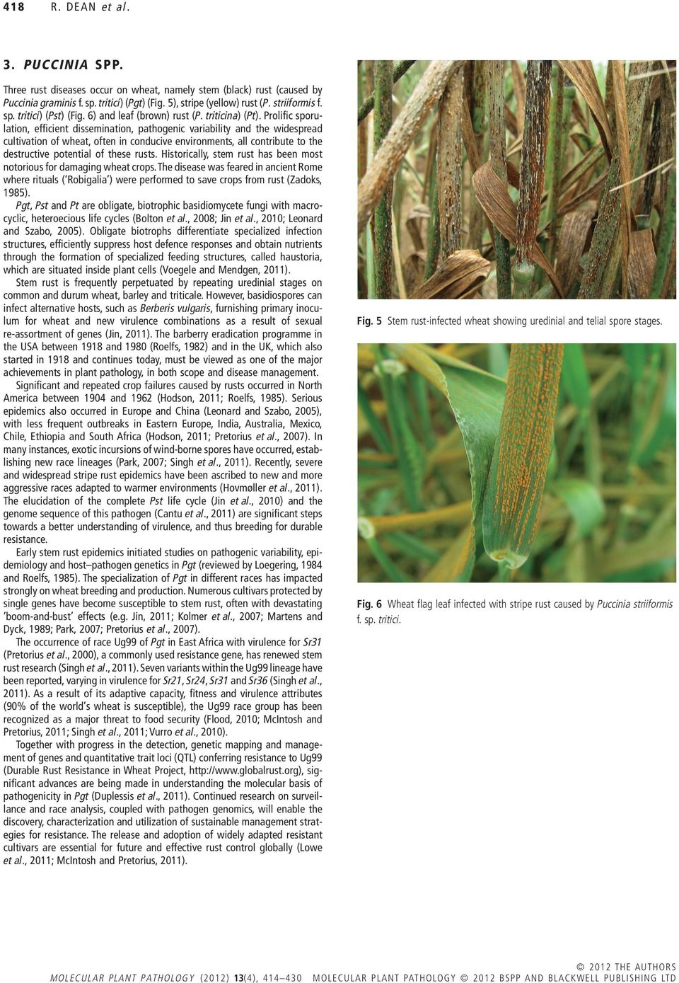 Prolific sporulation, efficient dissemination, pathogenic variability and the widespread cultivation of wheat, often in conducive environments, all contribute to the destructive potential of these