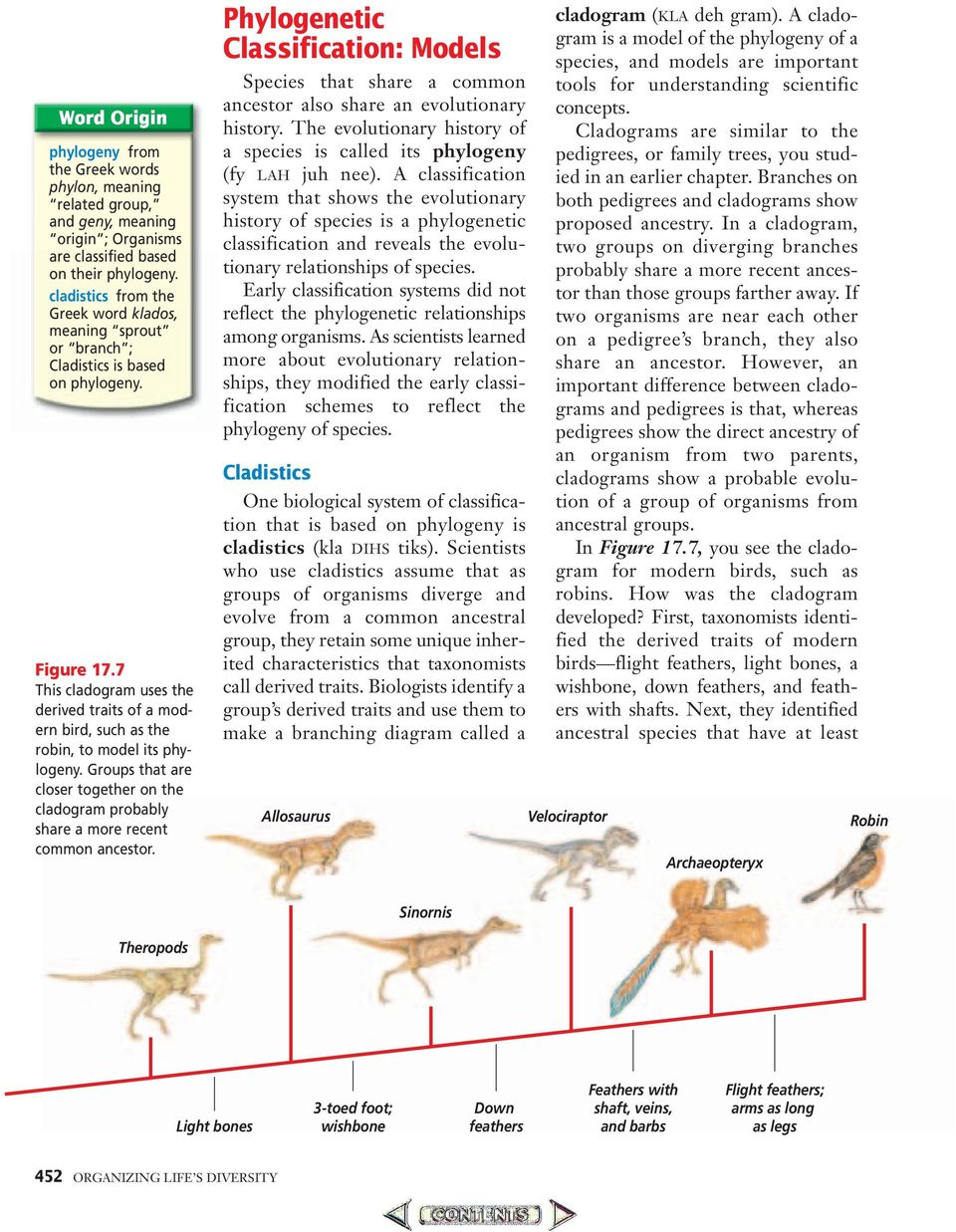 7 This cladogram uses the derived traits of a modern bird, such as the robin, to model its phylogeny. Groups that are closer together on the cladogram probably share a more recent common ancestor.