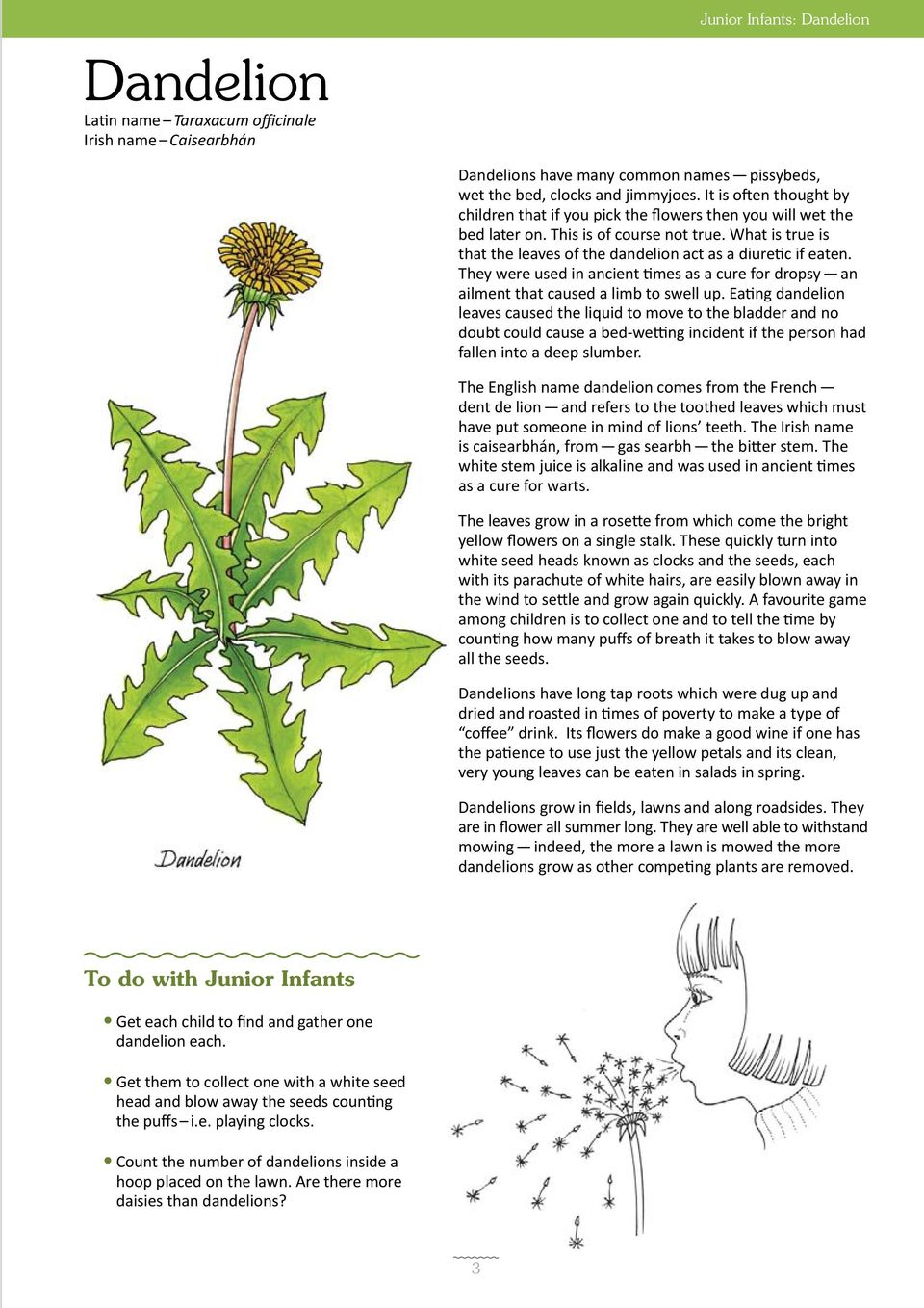 What is true is that the leaves of the dandelion act as a diuretic if eaten. They were used in ancient times as a cure for dropsy an ailment that caused a limb to swell up.