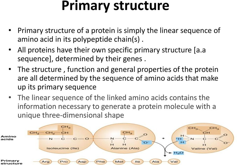 Peptide Bond Amino acids are linked together by peptide ...