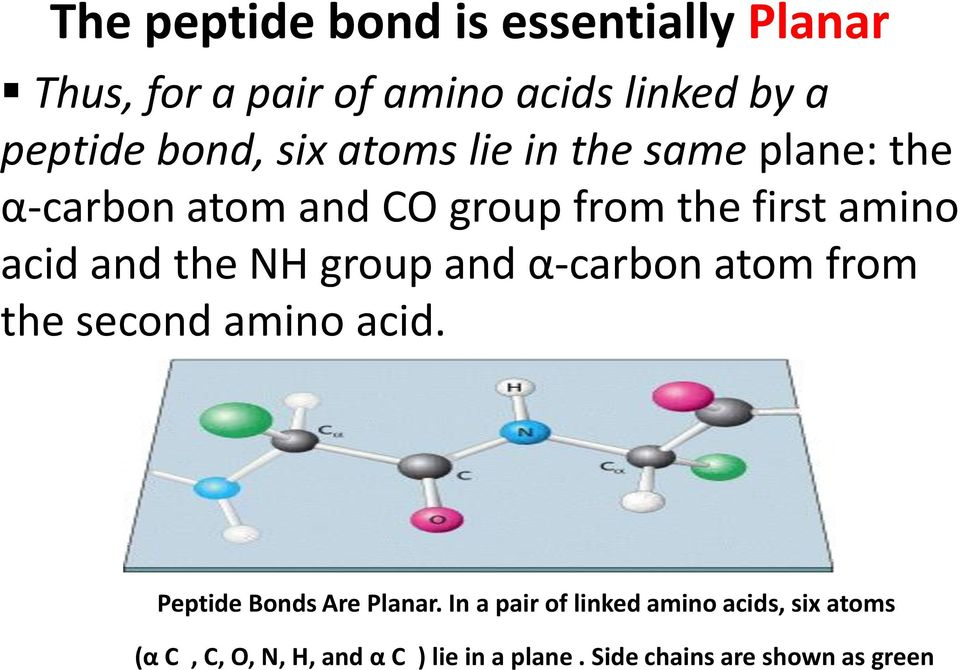 Two amino acids are linked by a peptide bond when