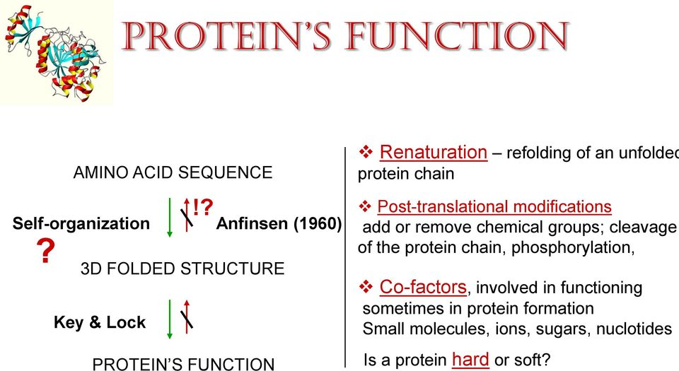 add or remove chemical groups; cleavage of the protein chain, phosphorylation, Co-factors, involved in