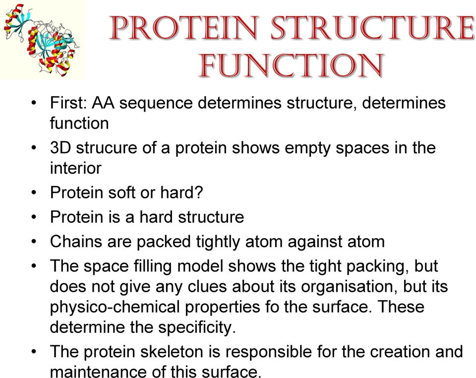 Protein is a hard structure function Chains are packed tightly atom against atom The space filling model shows the tight