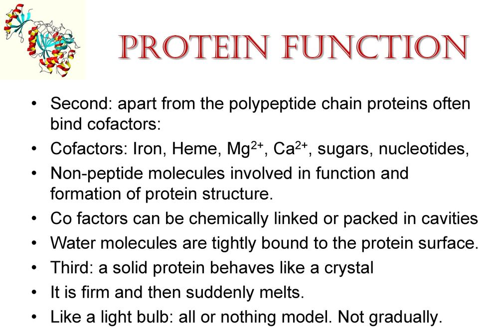 Co factors can be chemically linked or packed in cavities Water molecules are tightly bound to the protein surface.