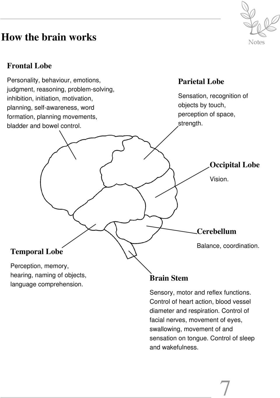 Cerebellum Temporal Lobe Perception, memory, hearing, naming of objects, language comprehension. Brain Stem Balance, coordination. Sensory, motor and reflex functions.