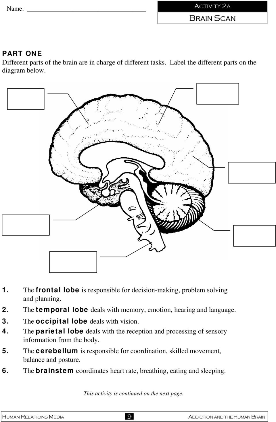 The occipital lobe deals with vision. 4. The parietal lobe deals with the reception and processing of sensory information from the body. 5.
