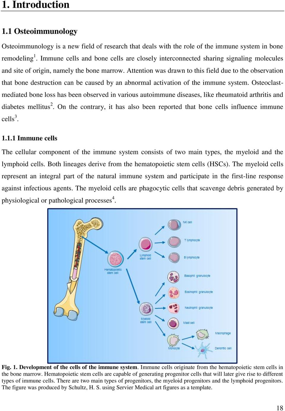 rheumatoid arthritis thesis Rheumatoid arthritis (ra) is a long-term autoimmune disorder that primarily affects joints it typically results in warm, swollen, and painful joints pain and.