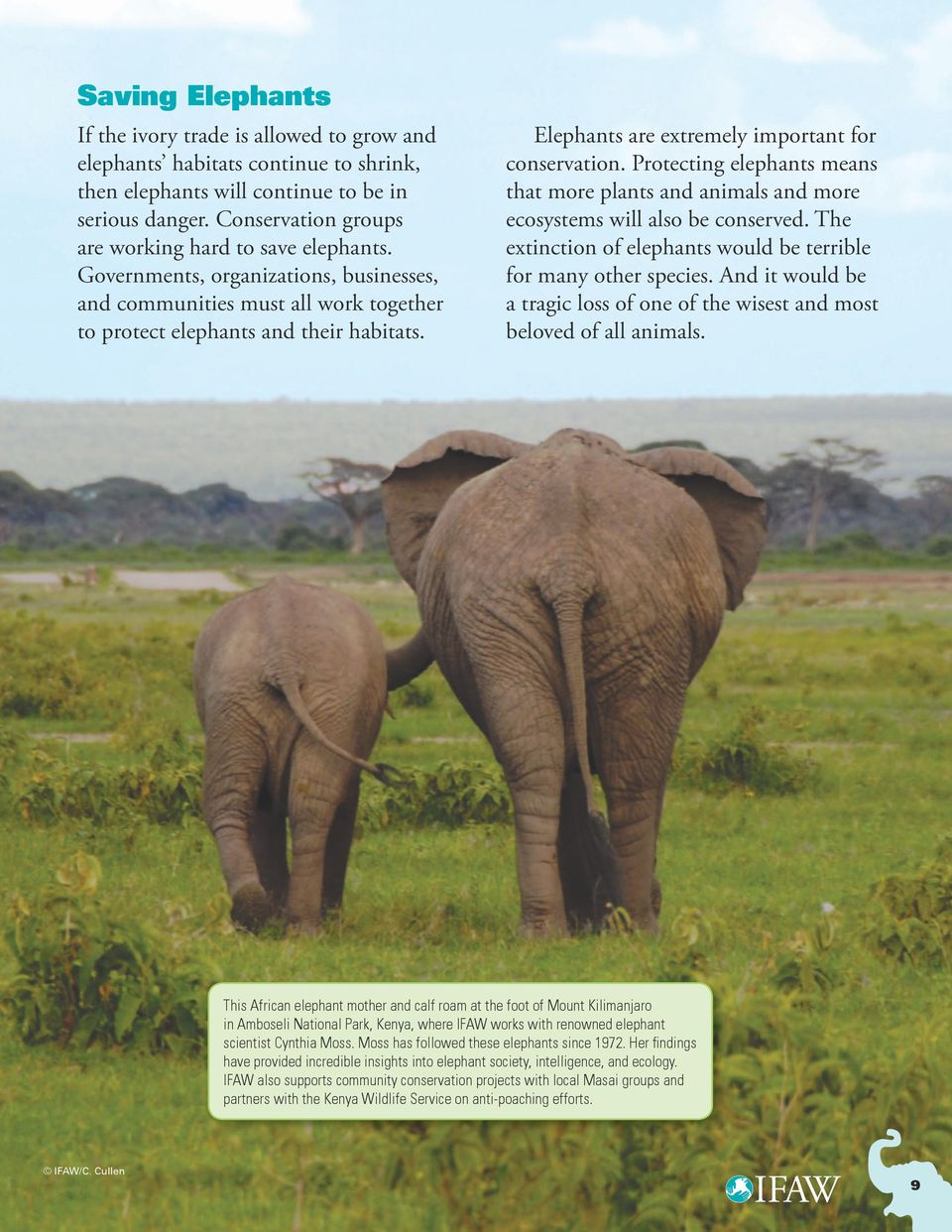 Elephants are extremely important for conservation. Protecting elephants means that more plants and animals and more ecosystems will also be conserved.